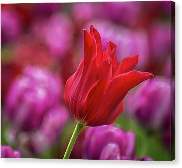 Canvas Print featuring the photograph Brazenly Delicate by Bill Pevlor
