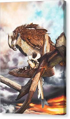 Osprey Canvas Print - Breakfast In America by Peter Williams