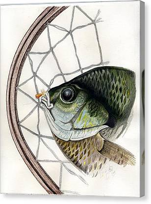 Bream And Net Canvas Print by H C Denney