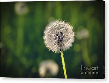 Breath Canvas Print by Alessandro Giorgi Art Photography