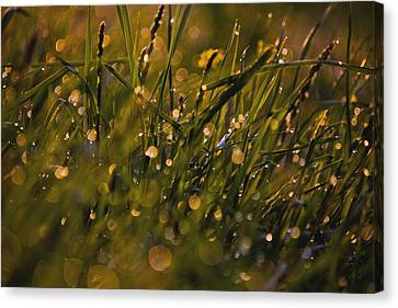 Breath Of Rain Canvas Print by Everett Houser