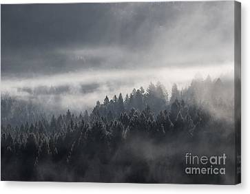Breath Of The Forest Canvas Print