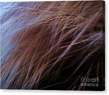 Canvas Print featuring the photograph Breeze by Vanessa Palomino