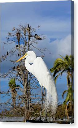 Breezy Egret Canvas Print by Josy Cue