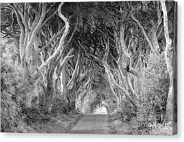 Bregagh Road Canvas Print