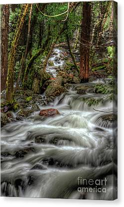 Canvas Print - Bridalveil Creek 967 by Terry Garvin