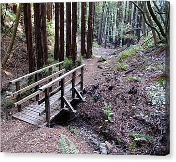 Bridge In The Redwoods Canvas Print by Ben Upham III