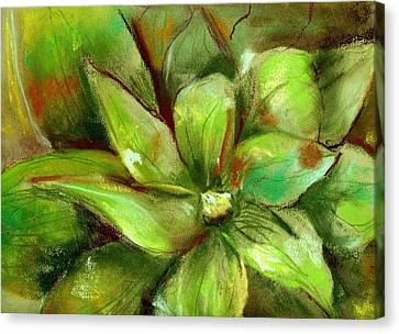 Canvas Print featuring the painting Bright Agave by Marilyn Barton
