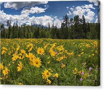 Bright And Beautiful Canvas Print by Leland D Howard