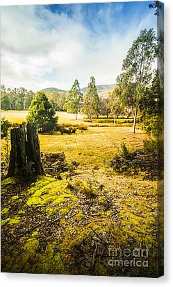 Bright And Colourful Forest Canvas Print by Jorgo Photography - Wall Art Gallery