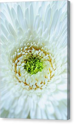 Canvas Print featuring the photograph Bright As A Lime by Christi Kraft