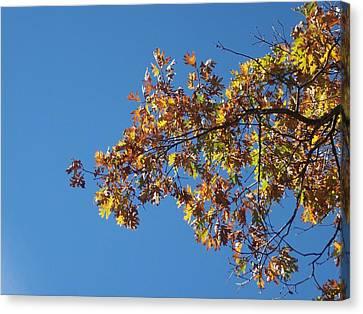 Bright Autumn Branch Canvas Print