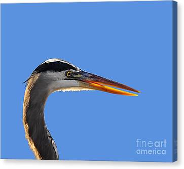 Canvas Print featuring the photograph Bright Beak Blue .png by Al Powell Photography USA