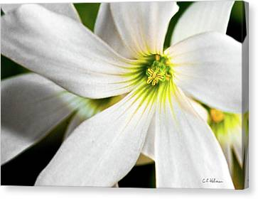 Bright Center Canvas Print by Christopher Holmes