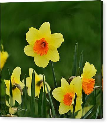 Bright Daffodils Canvas Print by Kae Cheatham