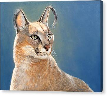 Bright Eyes - Caracal Canvas Print