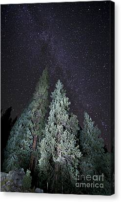 Bright Night Canvas Print
