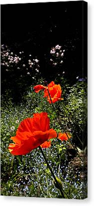 Bright Orange Canvas Print by Renate Nadi Wesley
