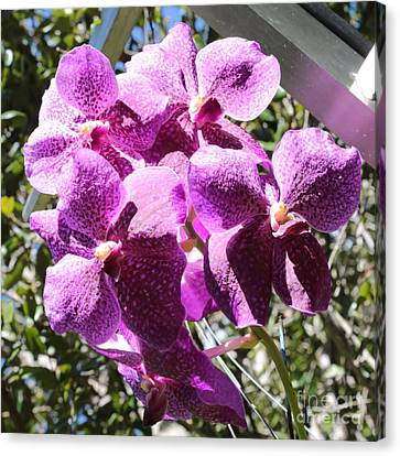 Florida Flowers Canvas Print - Bright Orchids by Carol Groenen