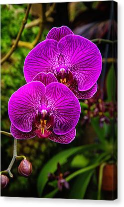 Bright Purple Orchids Canvas Print by Garry Gay