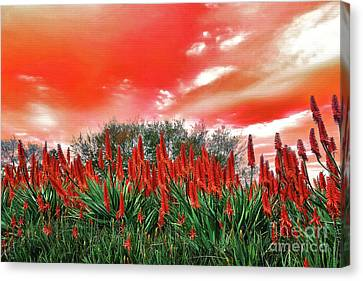 Canvas Print featuring the photograph Bright Red Aloe Flowers By Kaye Menner by Kaye Menner