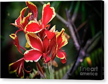 Canvas Print featuring the photograph Bright Spot In My Day by Mary Machare