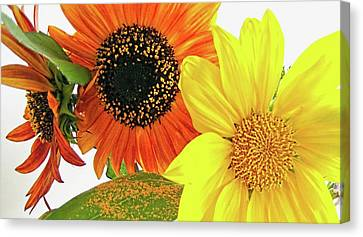 Bright Trio Canvas Print by Kathy Bassett
