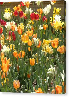 Canvas Print featuring the photograph Bright Tulips by Michael Flood