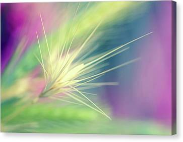 Bright Weed Canvas Print by Terry Davis