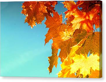 The Lord Of Autumnal Change Canvas Print