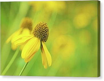 Bright Yellow Flower Canvas Print by David Stasiak