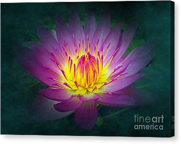 Brightly Glowing Lotus Flower Canvas Print