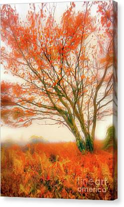 Canvas Print featuring the painting Brilliant Orange Autumn Fall Colors Tree Ap by Dan Carmichael