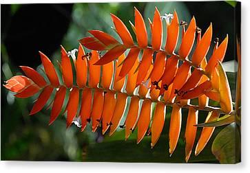 Brilliant Orange Nature Canvas Print