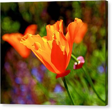 Wild Flower Canvas Print - Brilliant Spring Poppies by Rona Black