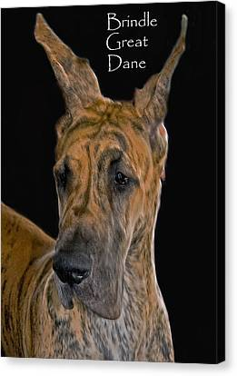 Brindle Great Dane Canvas Print by Larry Linton
