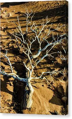 Brins Mesa 07-104 Stripped Bare Canvas Print by Scott McAllister