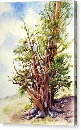 Canvas Print featuring the painting Bristle Cone Pine by Bonnie Rinier