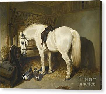 British A Grey Pony In A Stable With Ducks Canvas Print by MotionAge Designs