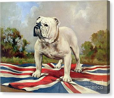 British Bulldog Canvas Print by English School