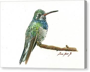 Broad Billed Hummingbird Canvas Print
