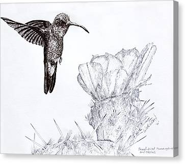 Broadbilled Hummingbird Canvas Print