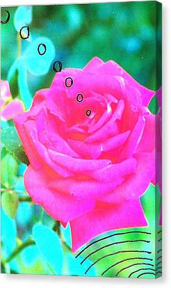 Canvas Print featuring the photograph Broadcasting Rose by Rod Ismay