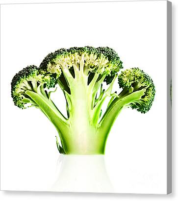 Broccoli Cutaway On White Canvas Print by Johan Swanepoel