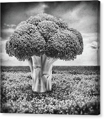 Broccoli Tree Canvas Print by Wim Lanclus