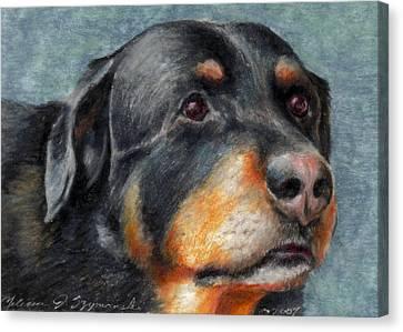 Brody Canvas Print by Melissa J Szymanski