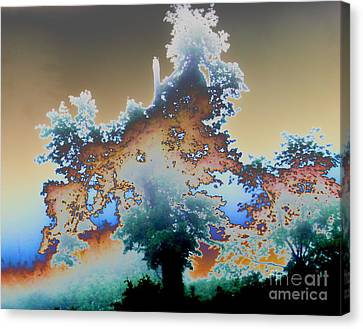 Canvas Print featuring the photograph Broken Dream Tree  by Jesse Ciazza