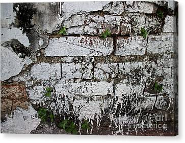 Broken Stucco Wall With Whitewashed Exposed Brick Texture And Ve Canvas Print