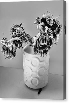 Broken Sunflowers Canvas Print by William Dey