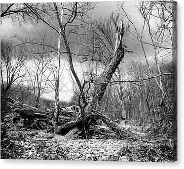 Canvas Print featuring the photograph Broken Tree by Alan Raasch